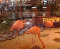 Flamingos_edmonton_mall_2